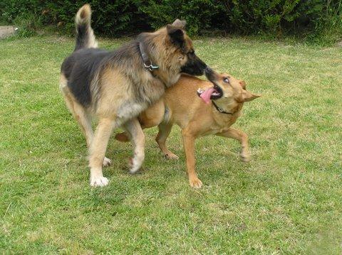 Winston et Canelle