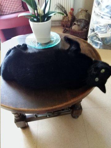 My cat 3