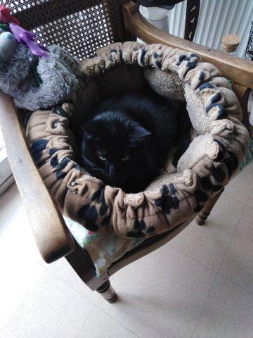 My cat 5