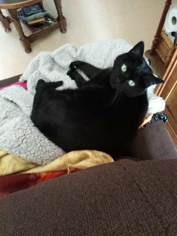 My cat 6