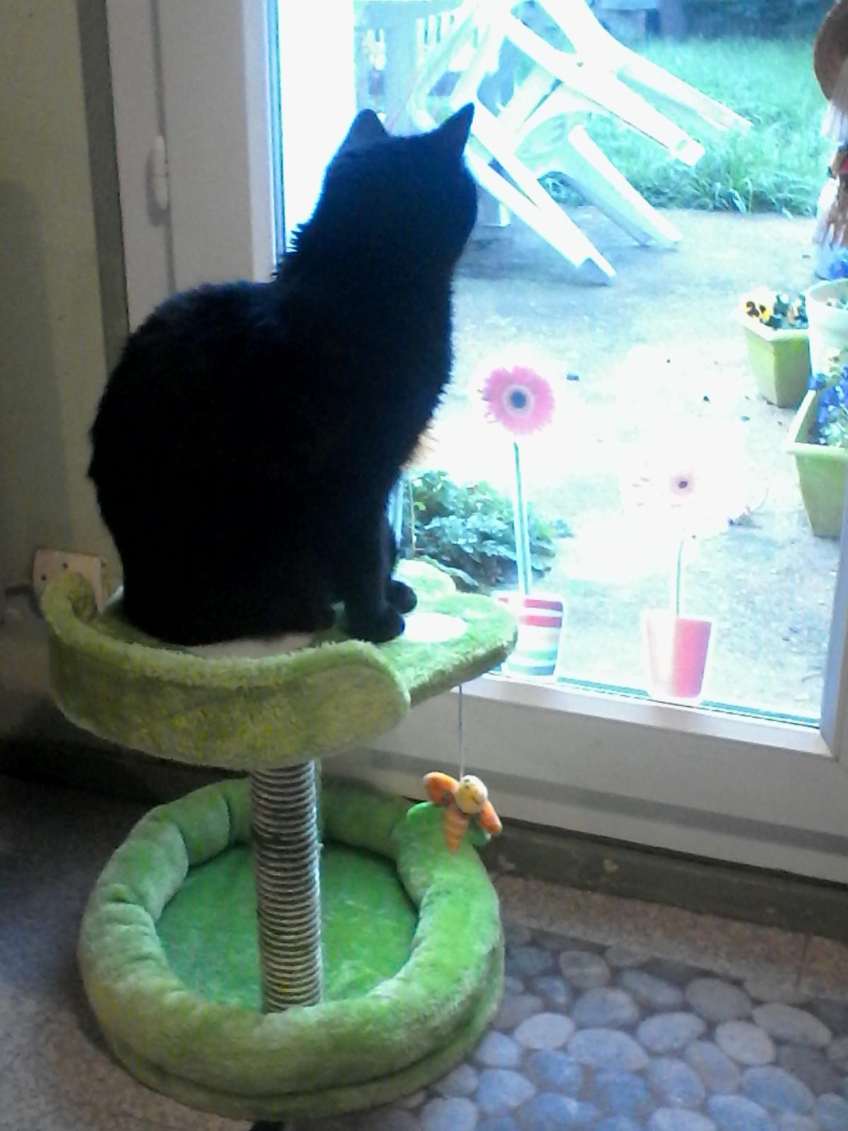 My cat1