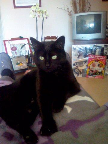 My cat13