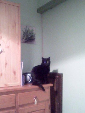 My cat14