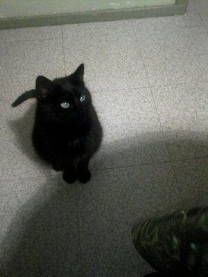 My cat2