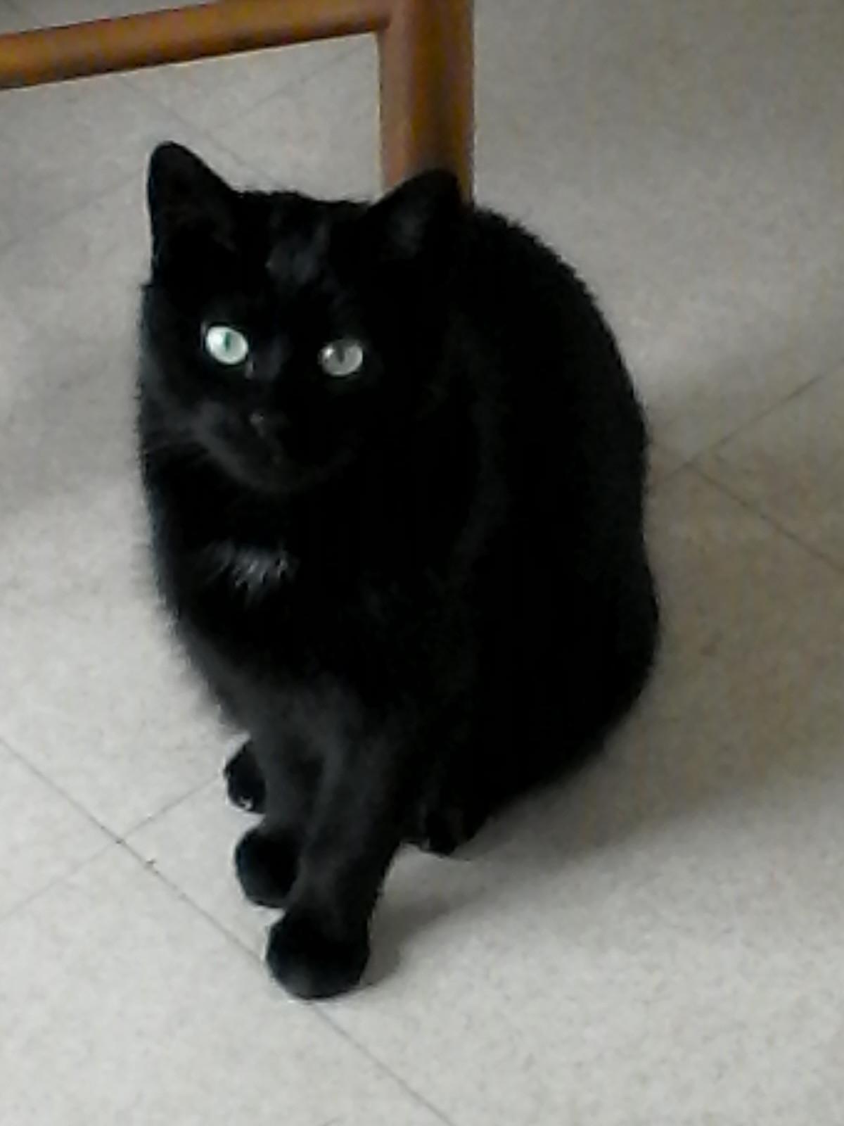 My cat4