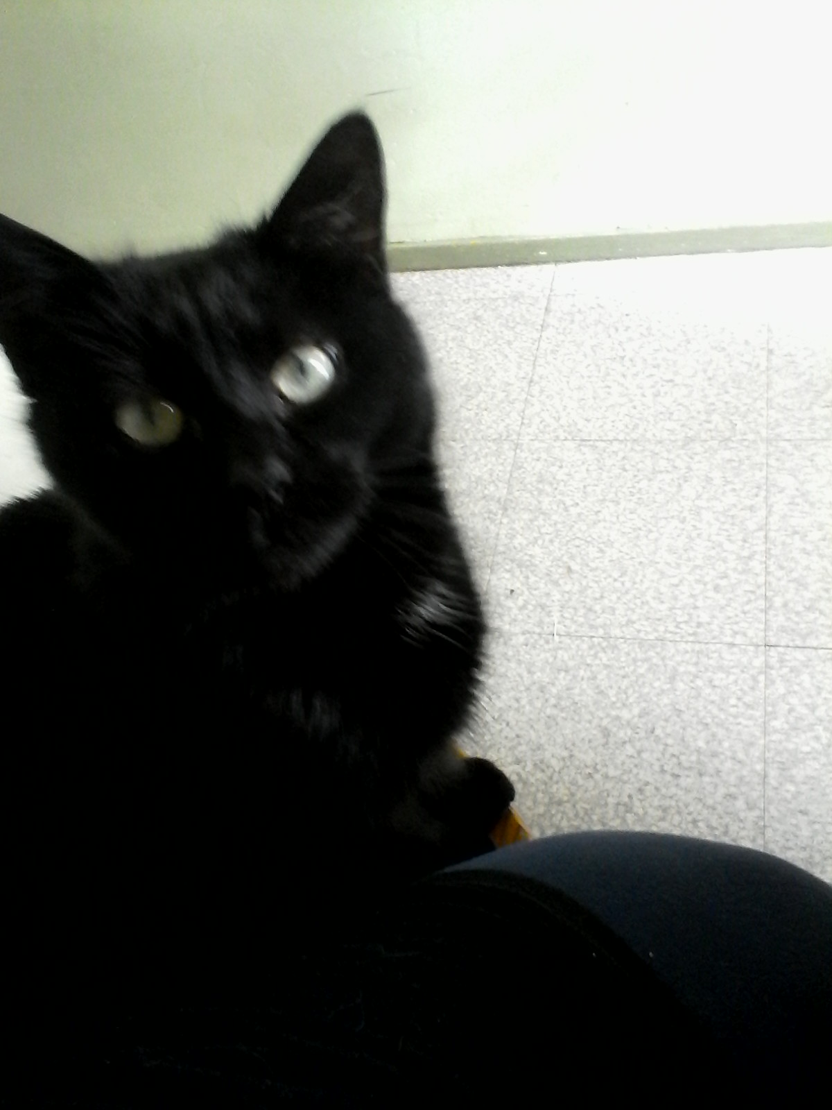 My cat5