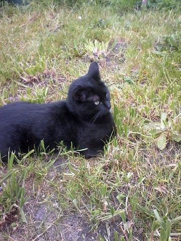 My cat8